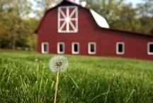 Barns / by Marcie Tucker