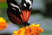 Butterflies / by Kristin Graham
