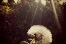 My photos / by Jaquelin Hetherington
