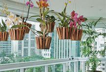 Plantas Penduradas