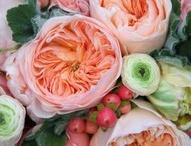 Flowers / by Cindy Ann