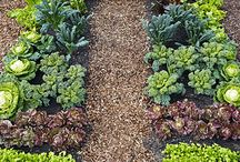 Cool Weather Crops / The SF Bay Area has a perfect climate for year-round gardening.