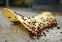 Για τα  μυρμήγκια.