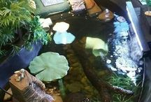 terrapins and turtles