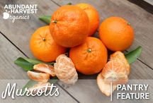 AHO Organic Pantry Items