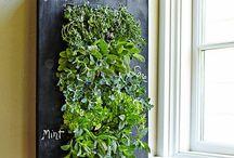 壁に緑 / 企画