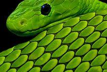 Nature....Reptiles