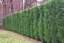 fences and hedging / Inspirational fences and hedging