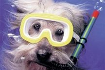 Underwater Dog Photos / Canines who love to swim and dive captured in great underwater dog photos!