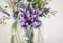 Flores divinas / Nos inspiramos con todas la variedades de flores y aromas para nuestras fragancias!