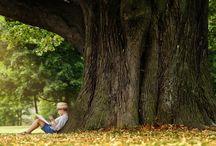 Ağaç Sevgisi...