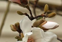 Flori martisor