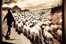 Black Sheep Principles / A Black Sheep is someone who doesn't follow the mainstream. Who stands out in the crowd.  Who embraces the different, the creative. Who can find the humour in things others can't.
