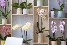 Орхидеи в интернете