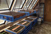 Zimná záhrada+Pestovanie