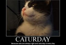Cat'turday / All about Cats. Celebrating our beloved fur babies.  / by Native By Designz