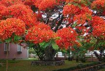 magnífica essa é a árvore amei