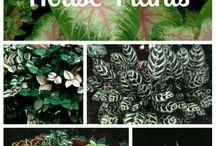 indoor plants kingdom