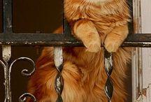 Ζώα-γάτα-μικρά αιλουροειδή