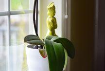 Planten verzorgingstips