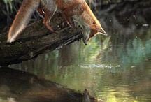 Animals - Cute