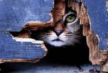 Animals: Peek-a-boo!