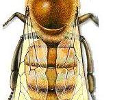 Honey Bee Bee / by Sandra Berryhill