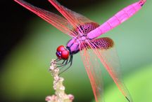 Dewdrops and dragonflies