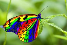 Bugs & Butterflies / The beauty of the butterflies & the coolness of the bugs make all of God's creatures so wonderful!