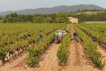 Paul Dubrule - La Cavale / Visite du vignoble et des chais dans les vignobles Paul Dubrule -  La Cavale Rhône Réservez avec winetourbooking.com