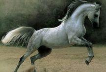 Horse / by Svetlana Danilova