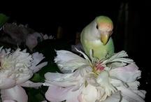 Mes Oiseaux / Voici les photos de mes bébés plumes