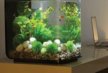 Nano aquariums!!