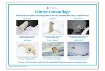 Winter / Fun activities, colouring in pictures, crafts and more to celebrate winter!  / by iChild.co.uk