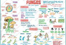 Mikrobiyoloji mantar