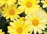 D -- Flowers