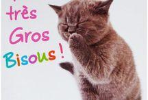 CAT CARDS / Les chats et les cartes postales