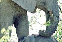 Elephants / by Dr. Kim Bloomer