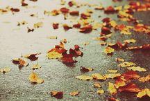 Rainy Days / rain, beautiful rainy photographs