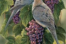 holúbky