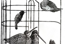 Open Cages
