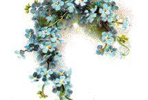 BLOEMEN / FLOWERS / by Marian Weishaupt