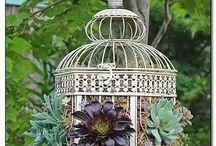 Succulent Love <3