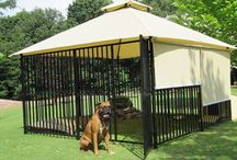 outdoor stuff for the pups