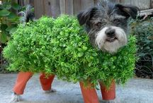 Best Pet Costumes / Who doesn't like to dress up Fido? Can you top these great pet costumes?