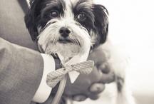 cutie patootie pets / by Lela Cerff-Liso
