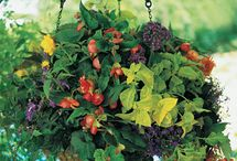 container gardening / by Laura Castle