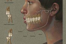 Dental ;)