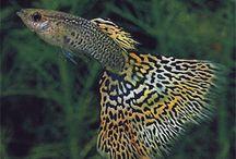 Fishes / Pretty fishies