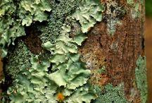 Mosses, so soft